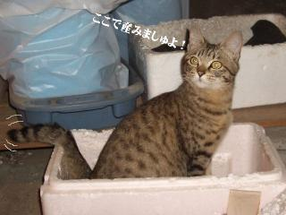 こなみの出産02
