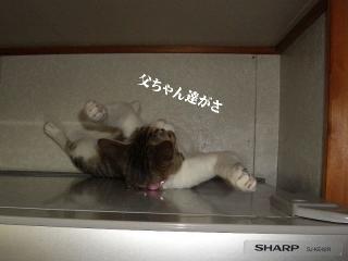 冷蔵庫な女01
