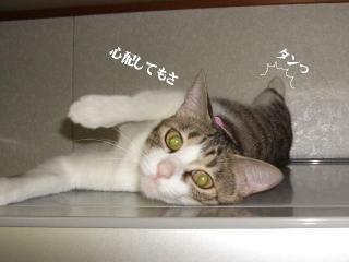 冷蔵庫な女02