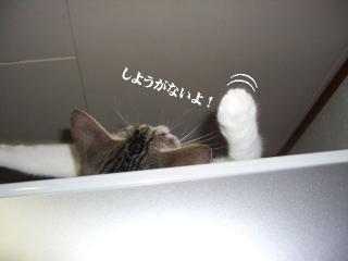 冷蔵庫な女03