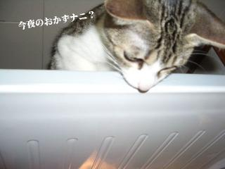 冷蔵庫な女05