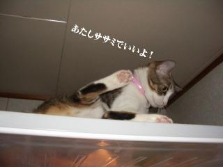 冷蔵庫な女06