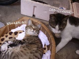 こなみの出産08