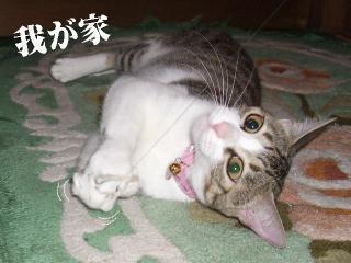 一応若手06