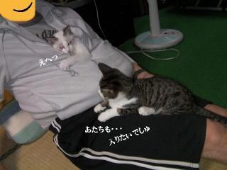 有袋猫01