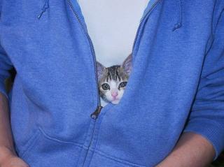 有袋猫02