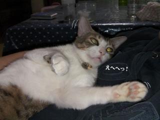 有袋猫03