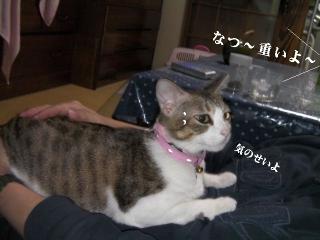 有袋猫04