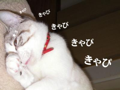 愛しのニャンズ01