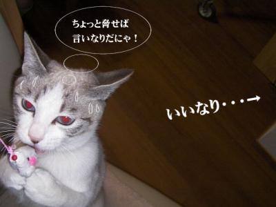愛しのニャンズ05