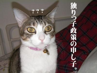 愛しのニャンズ09