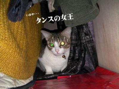 愛しのニャンズ10