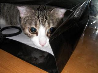 子猫失踪001