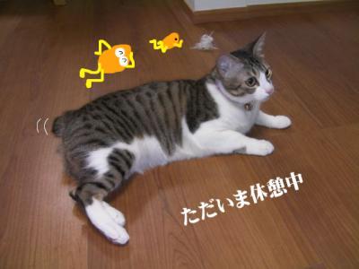 くるくる猫01