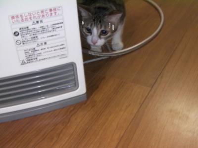 くるくる猫02