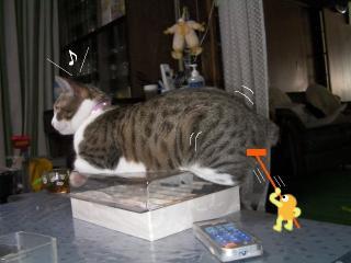 子猫失踪002