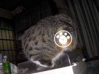 子猫失踪003