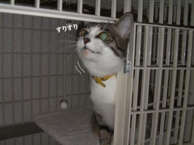 子猫が01