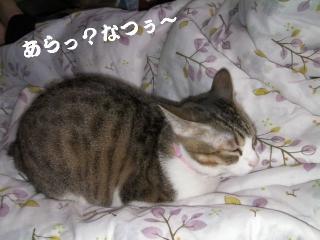 初猫団子01