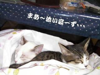 初猫団子02