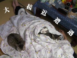 初猫団子04