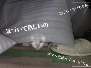 なつ特集02