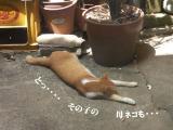 子猫の爪切り02