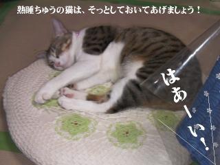 なつ特集04