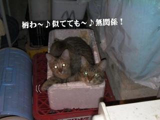 ごまみ体操04
