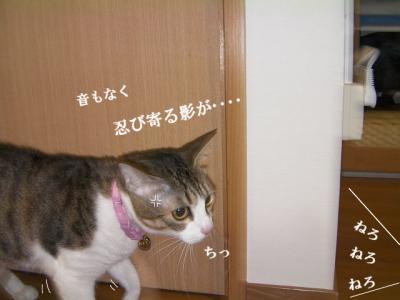 猫寄せ餌02