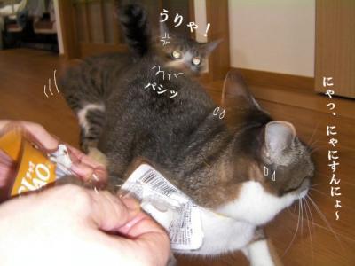猫寄せ餌03