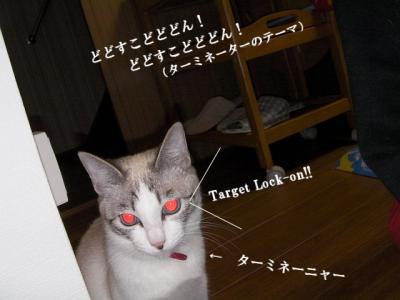 猫寄せ餌04