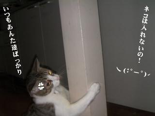 子猫に迫られ隊03