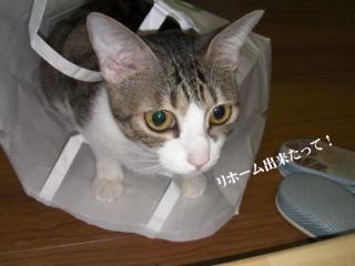 成猫の主張01