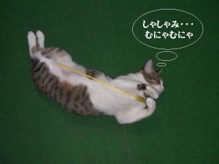 子猫に迫られ隊04