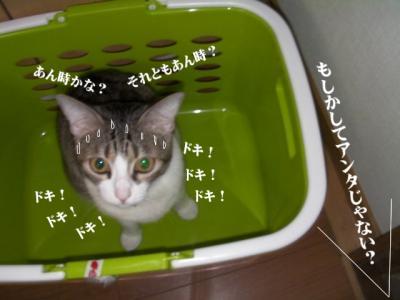 なめ猫達02