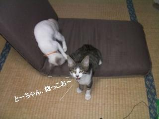 子猫に迫られ隊05