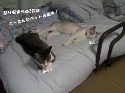 よーいDON01