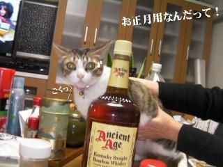 拉致る猫01
