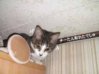 拉致る猫02