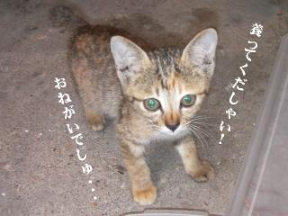 子猫BOX01