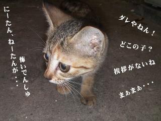子猫BOX02