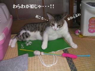 猫山社中02