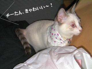 バンダナ猫03