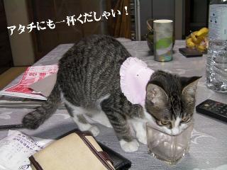 バンダナ猫04