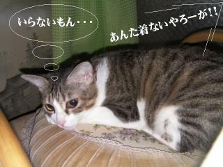 バンダナ猫05
