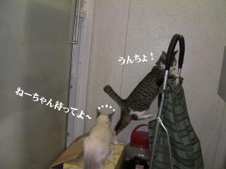 ヤドカリ猫01