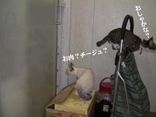 ヤドカリ猫02