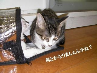 ヤドカリ猫04