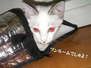 ヤドカリ猫05